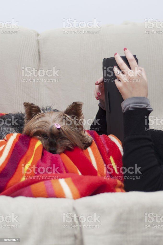 Pet lies next his master royalty-free stock photo