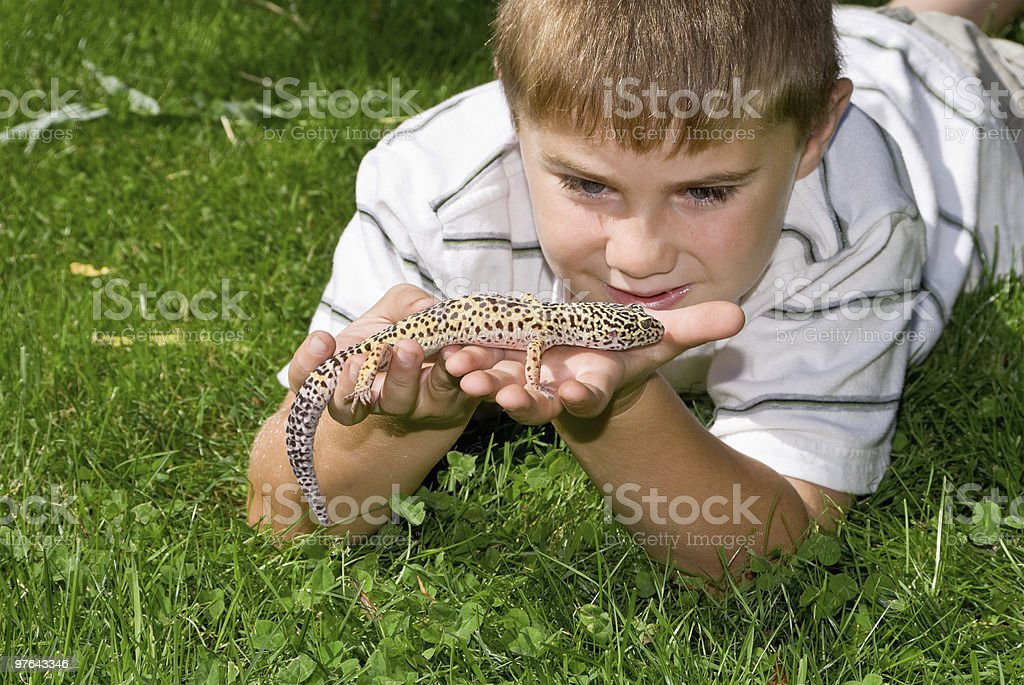 Pet Lizard royalty-free stock photo