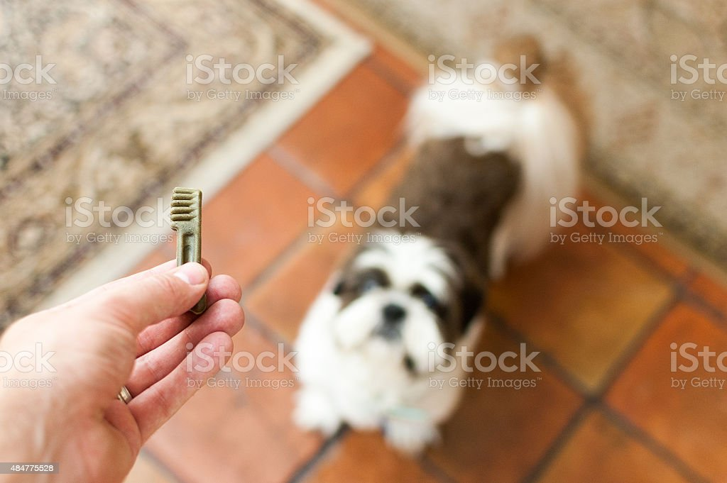 Pet owner giving his dog a treat stock photo