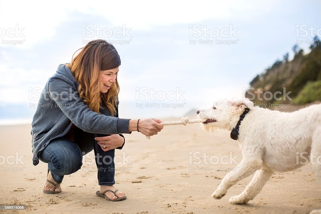 Pet owner playing tug of war with her dog on the beach stock photo