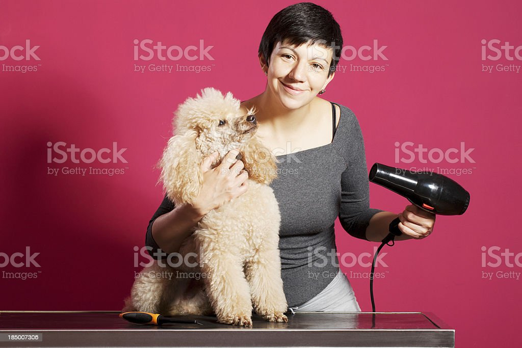 Pet -  Poodle at  Hair Salon royalty-free stock photo