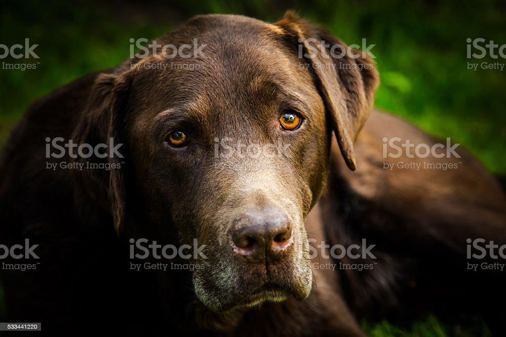 Pet Portrait of a Dog stock photo