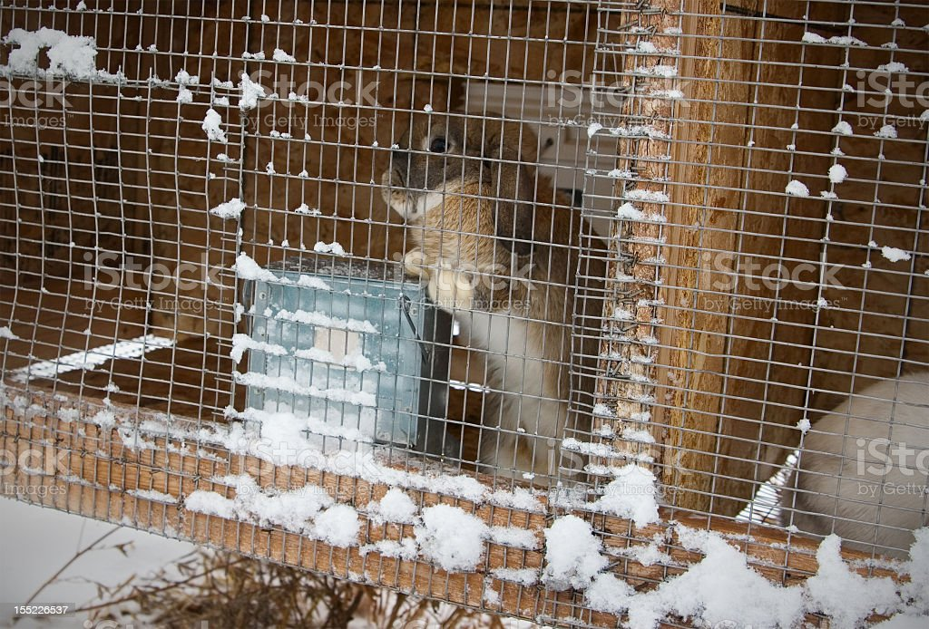 Pet Rabbit Outdoors stock photo