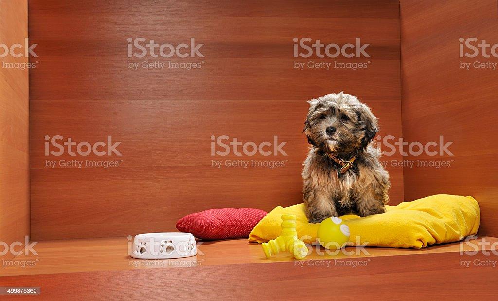 Pet shop stock photo