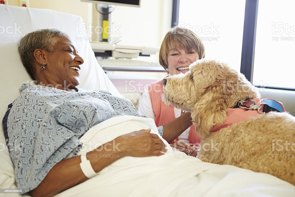 Pet Therapy Dog Visiting Senior Female Patient In Hospital stock photo