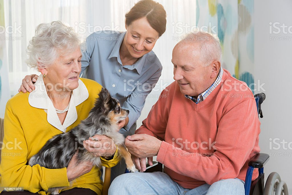 Pet Therapy – Senior couple with little dog stock photo