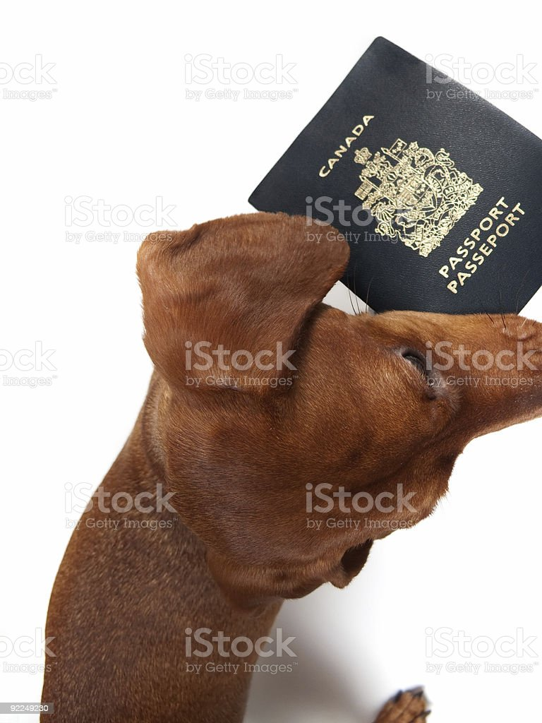 Pet Vacation royalty-free stock photo