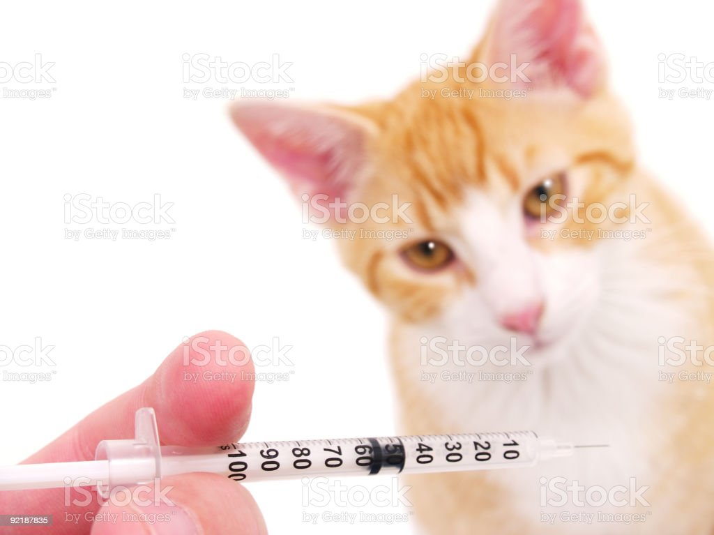 Pet Vaccination royalty-free stock photo