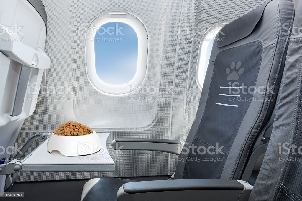pet welcome on board stock photo
