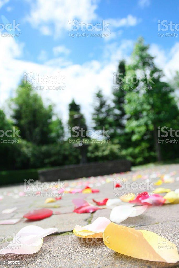 Petals at the Chapel stock photo
