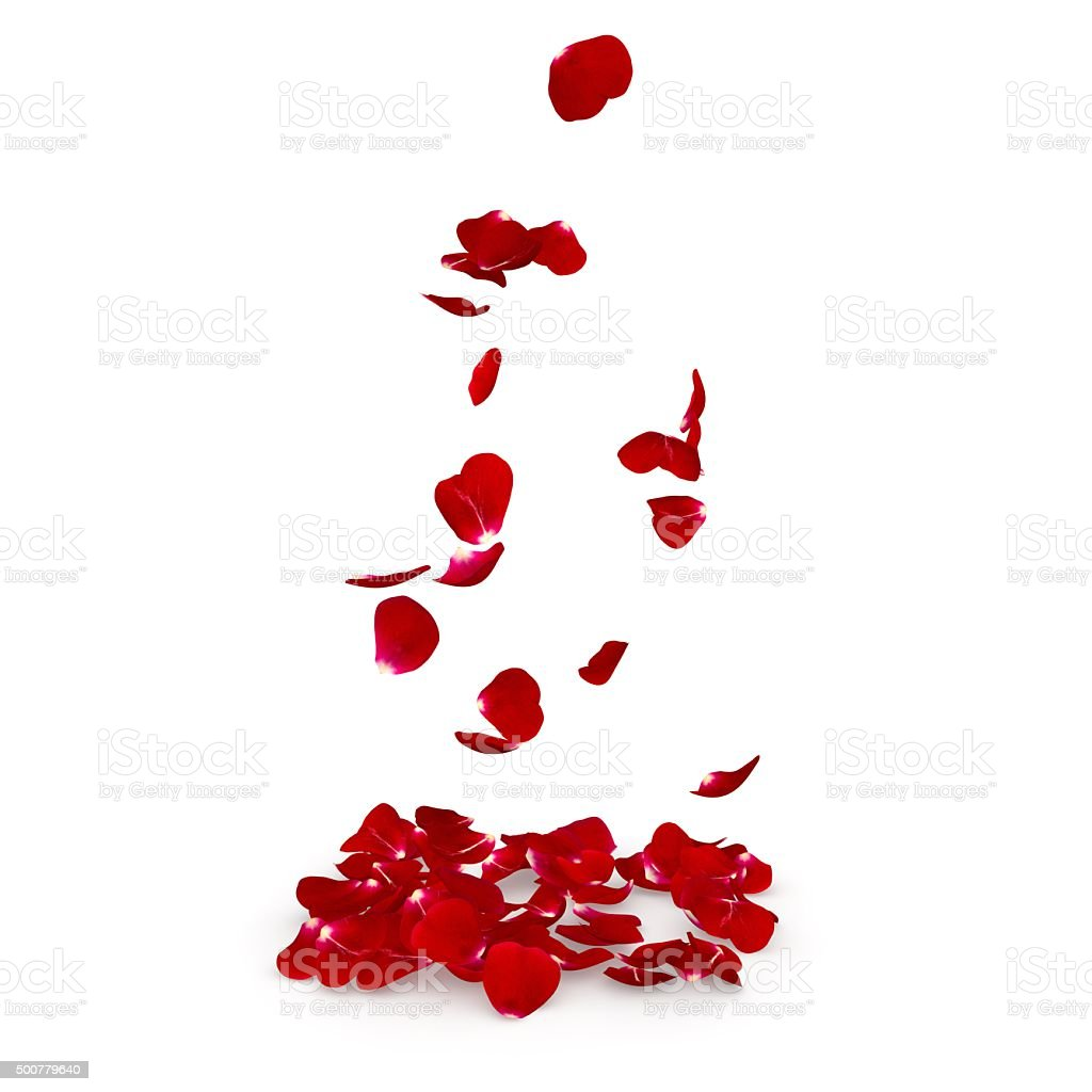 Petals dark red rose flying on the floor stock photo