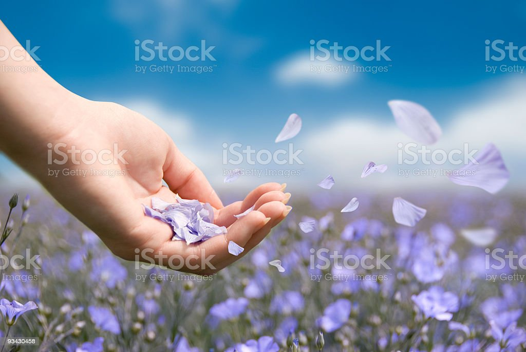Petals in Breeze stock photo