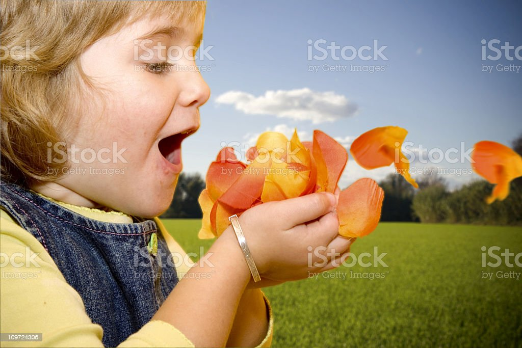 Petals in the air royalty-free stock photo
