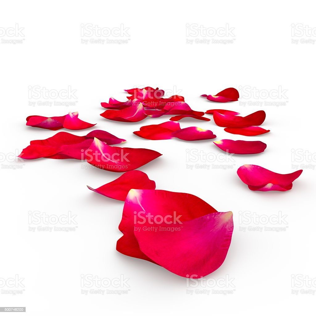 Petals of a red rose lying on the floor stock photo