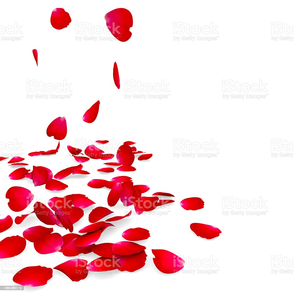 Petals of roses fall on a floor stock photo