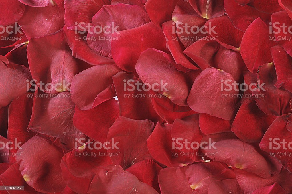 petals of scarlet roses as background royalty-free stock photo