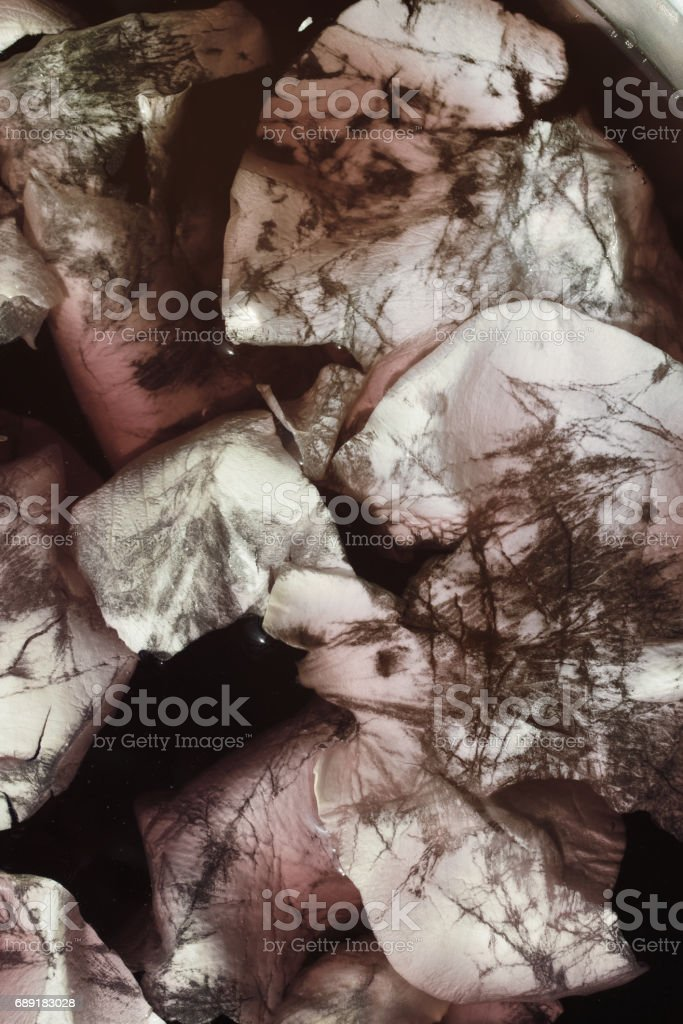Petals  of  white rose in water with blood stock photo