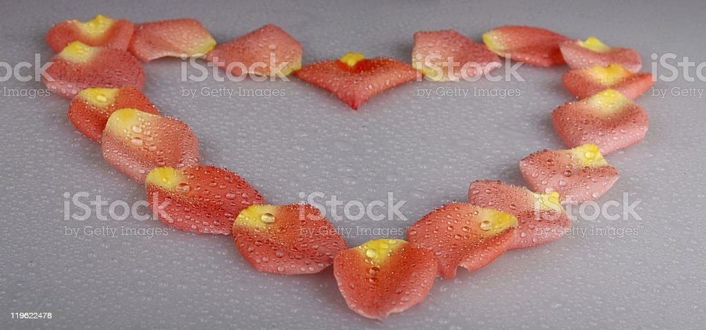 Petals on grey with water drops stock photo