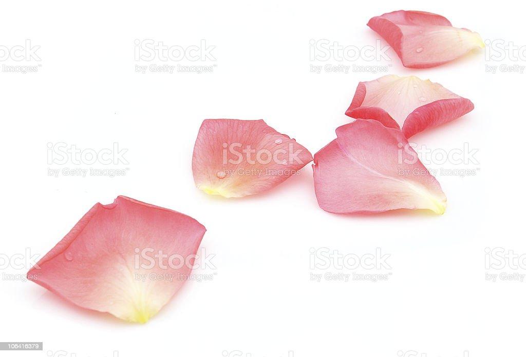 Petals royalty-free stock photo