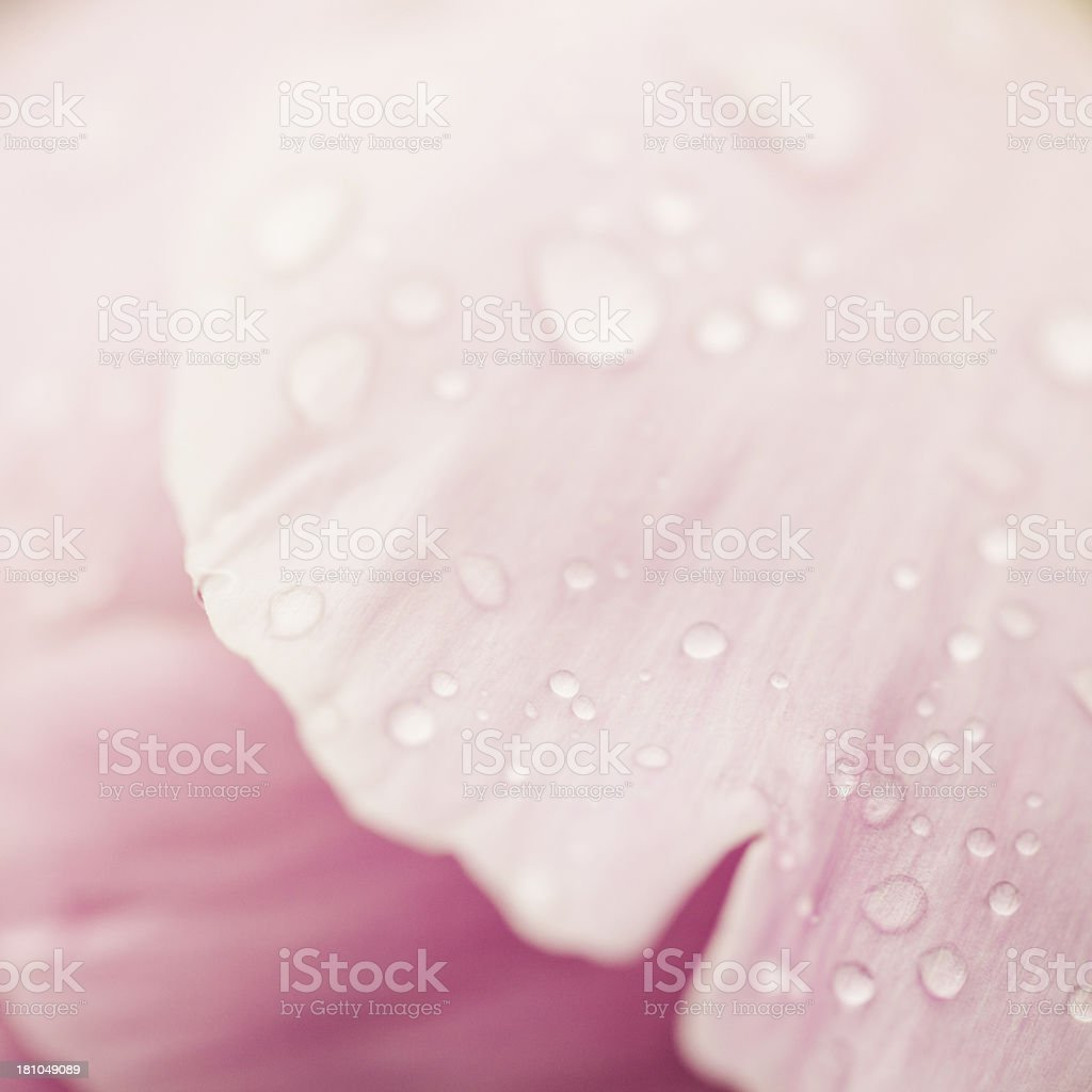 Petals royalty-free stock photo
