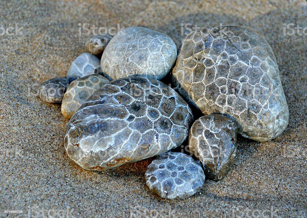 Petoskey Stones stock photo