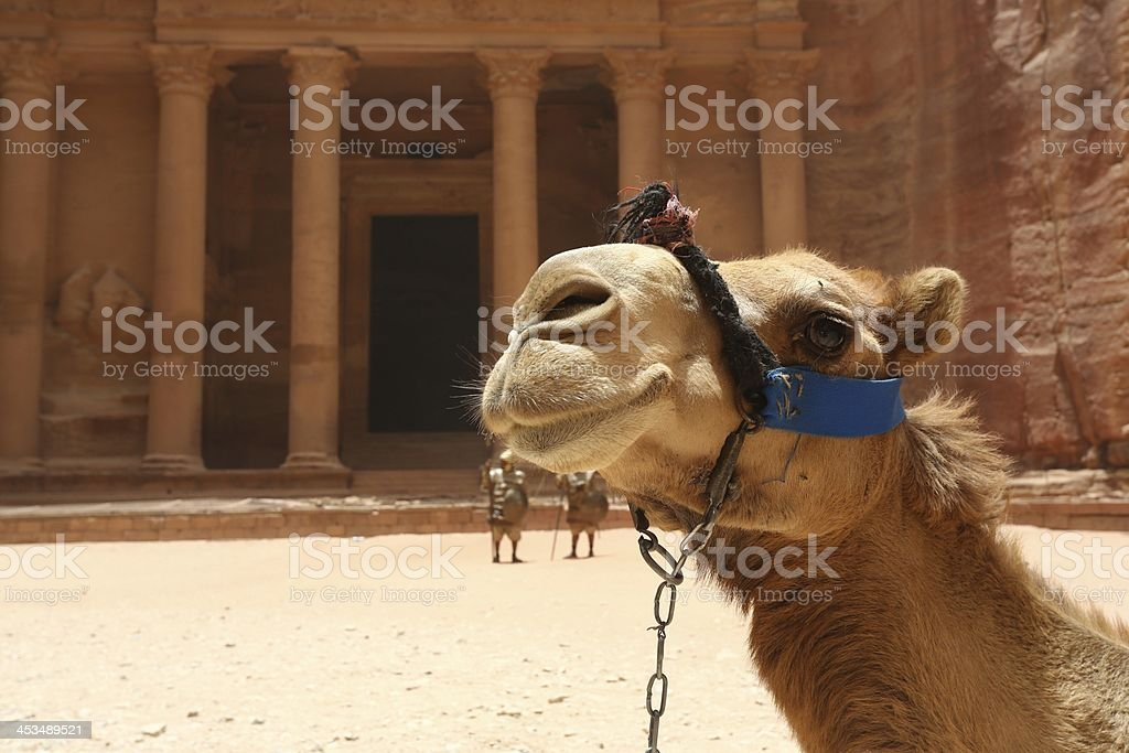 Petra Giordania cammello foto stock royalty-free