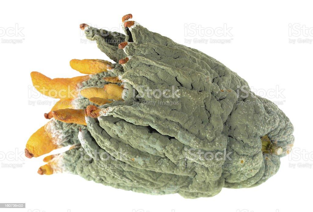 Petri Buddha's hand fruit royalty-free stock photo