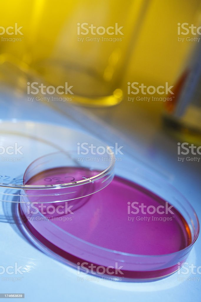 Petri Dish & Agar royalty-free stock photo