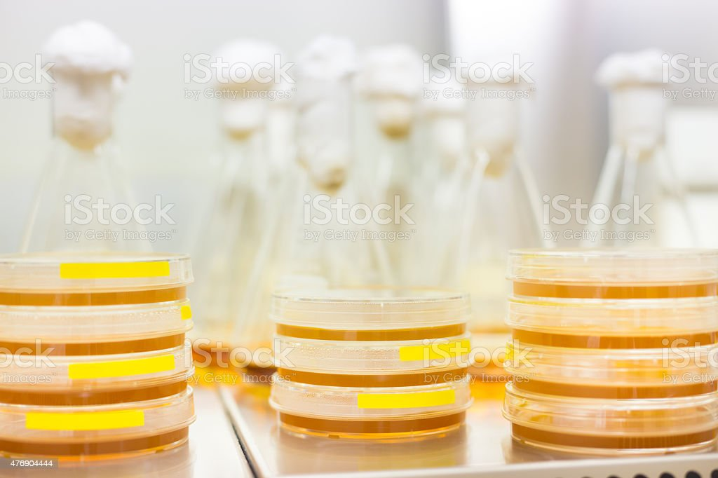 Petri dish and Erlenmeyer flask. stock photo