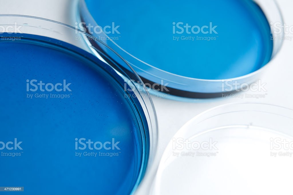 Petri Dish containing blue substance royalty-free stock photo