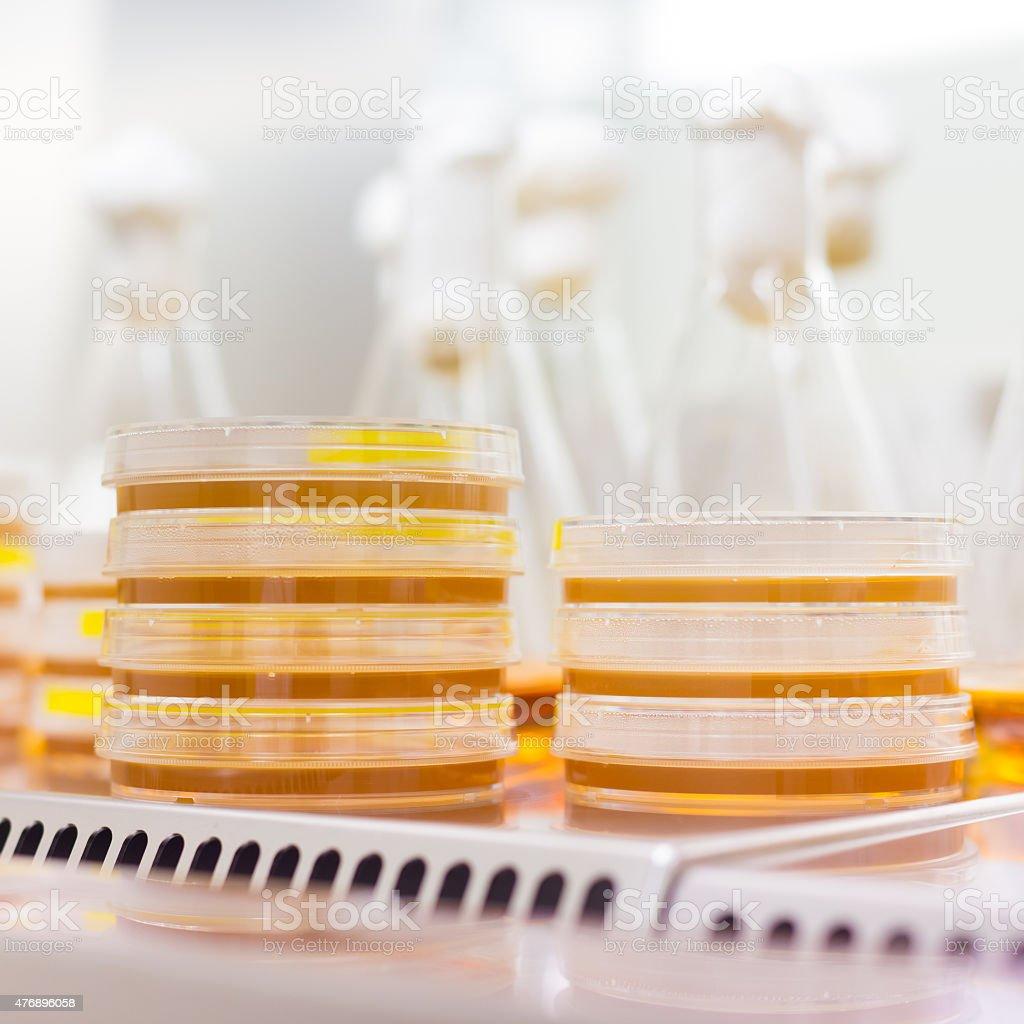 Petri dish in laminar flow stock photo
