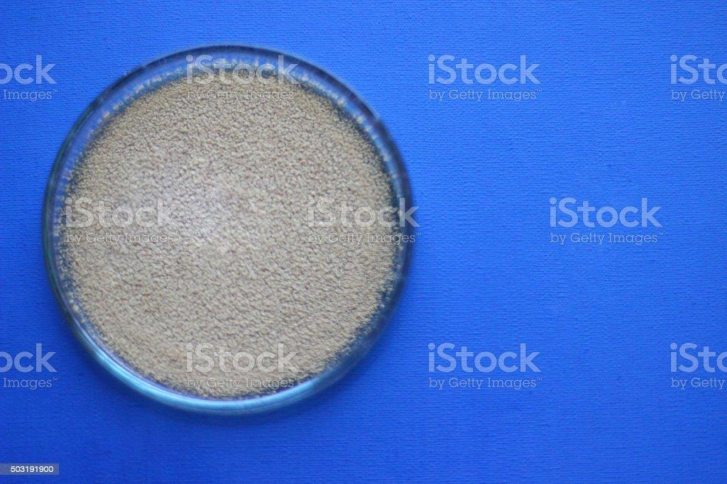 Petri dish on blue stock photo