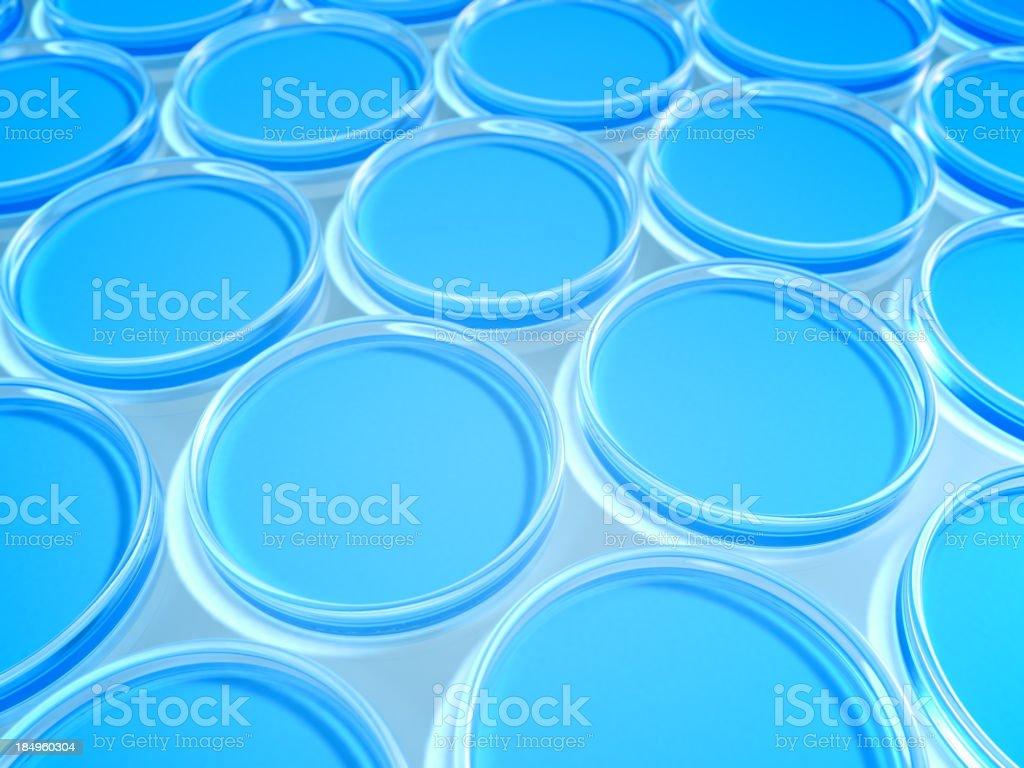 Petri dish. stock photo