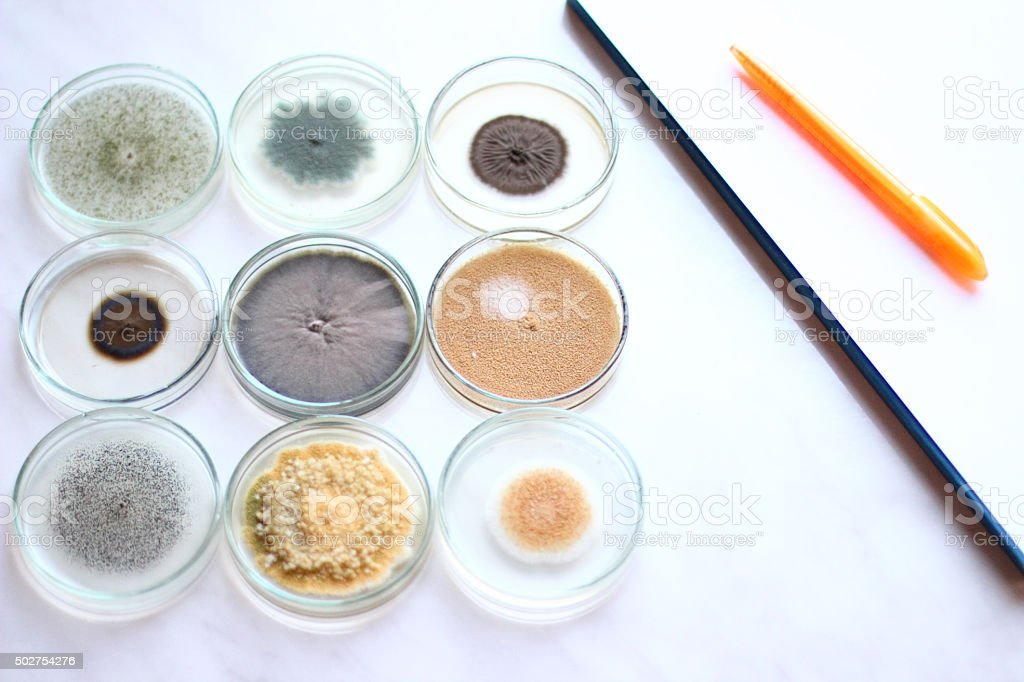 Petri dish stock photo