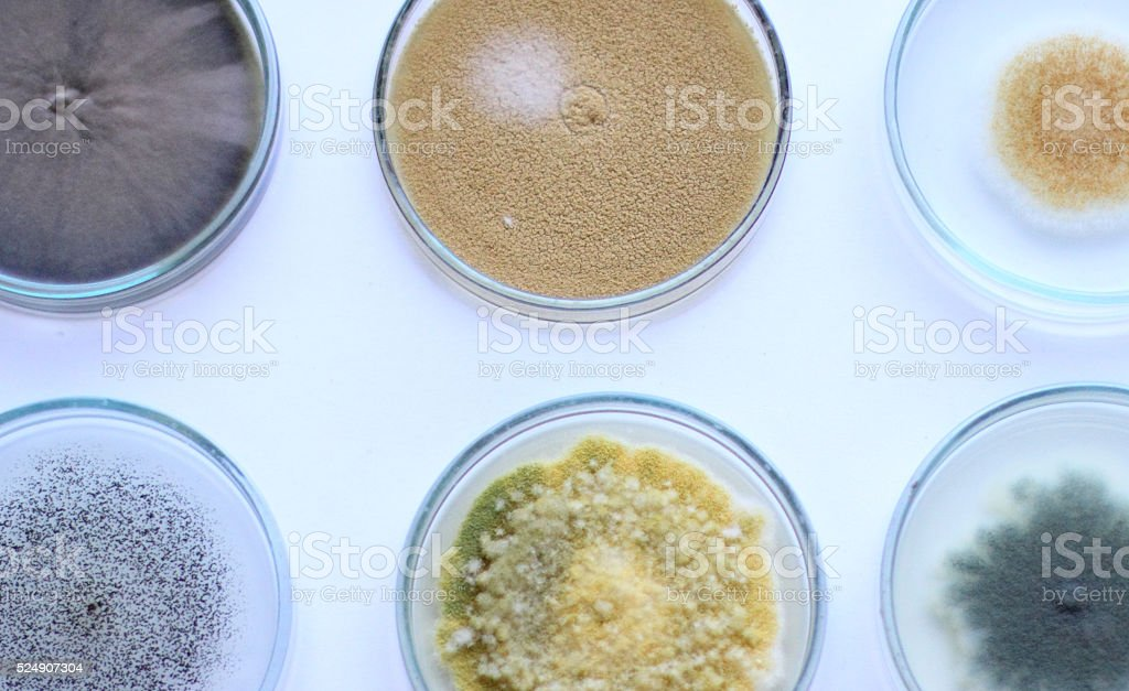 Petri dish stock photo