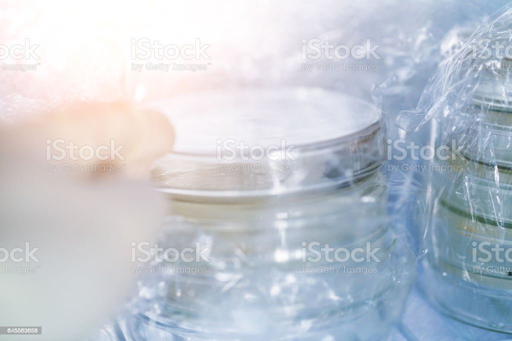petri dish stacked in the frige stock photo