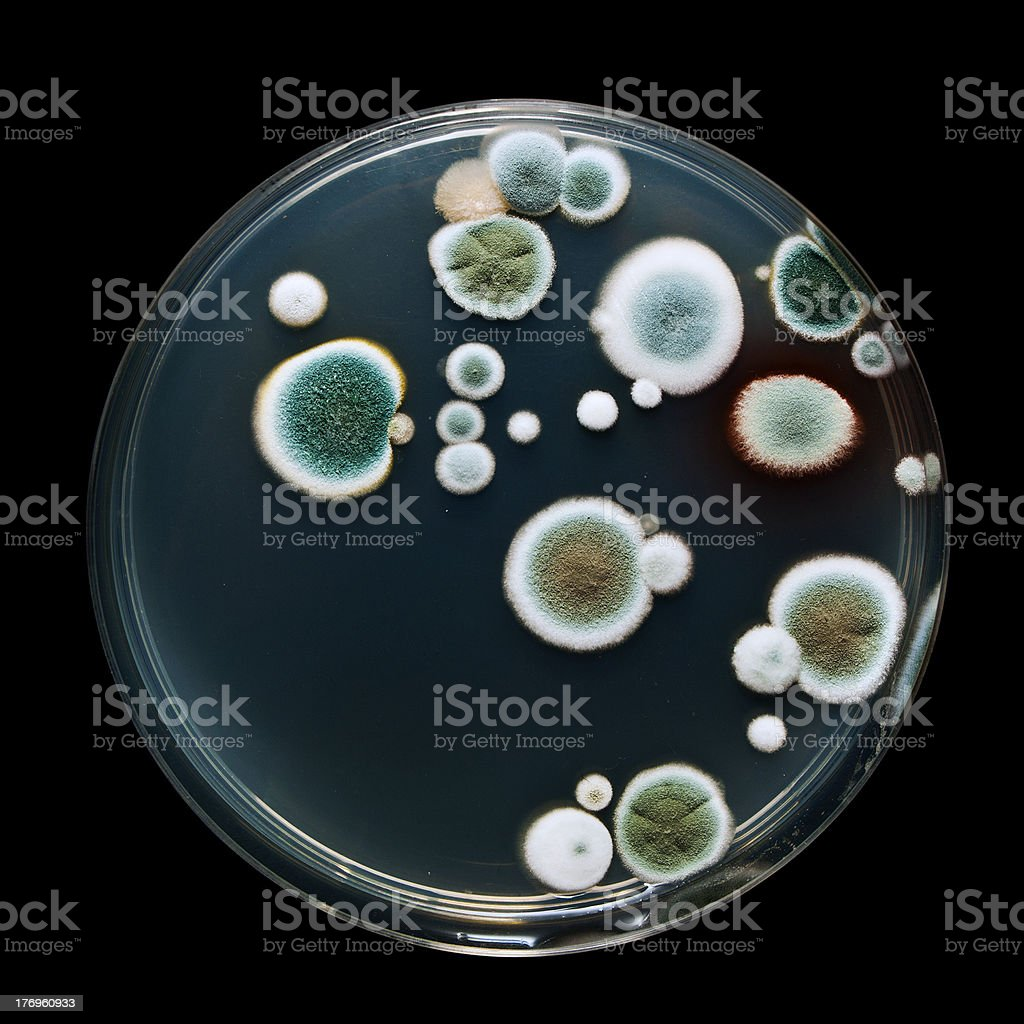 Petri dish with mold royalty-free stock photo