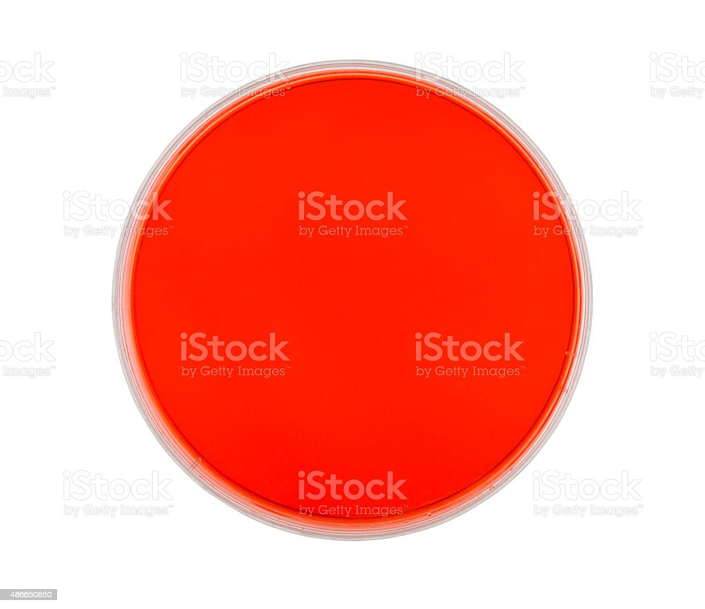 Petri Dish with Red Agar stock photo