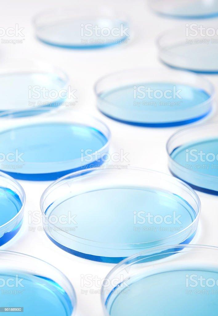 petri dishes background 1642 stock photo