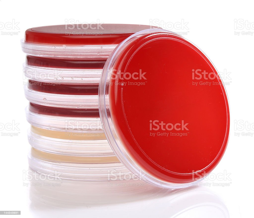 Petri dishes for medical research royalty-free stock photo
