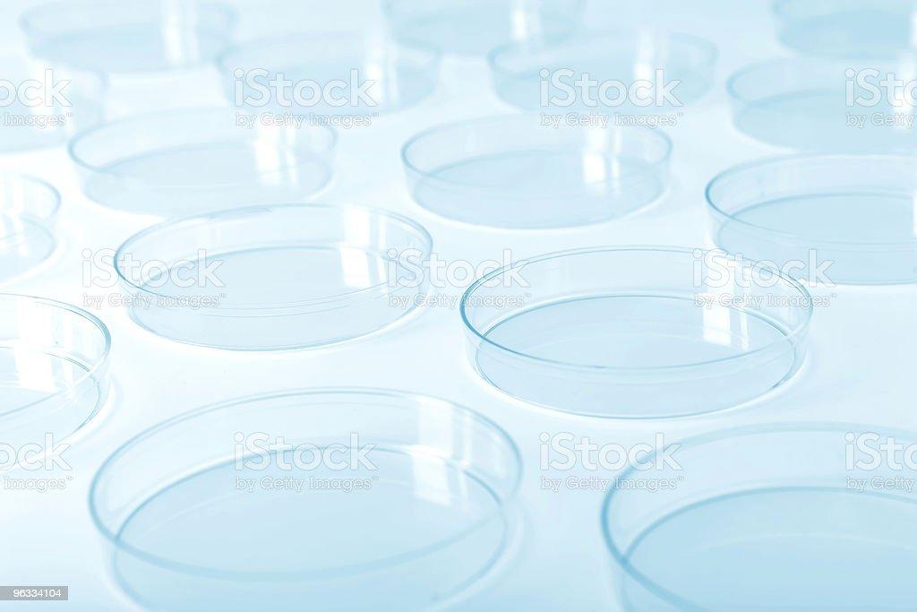 Petri dishes in a laboratory stock photo