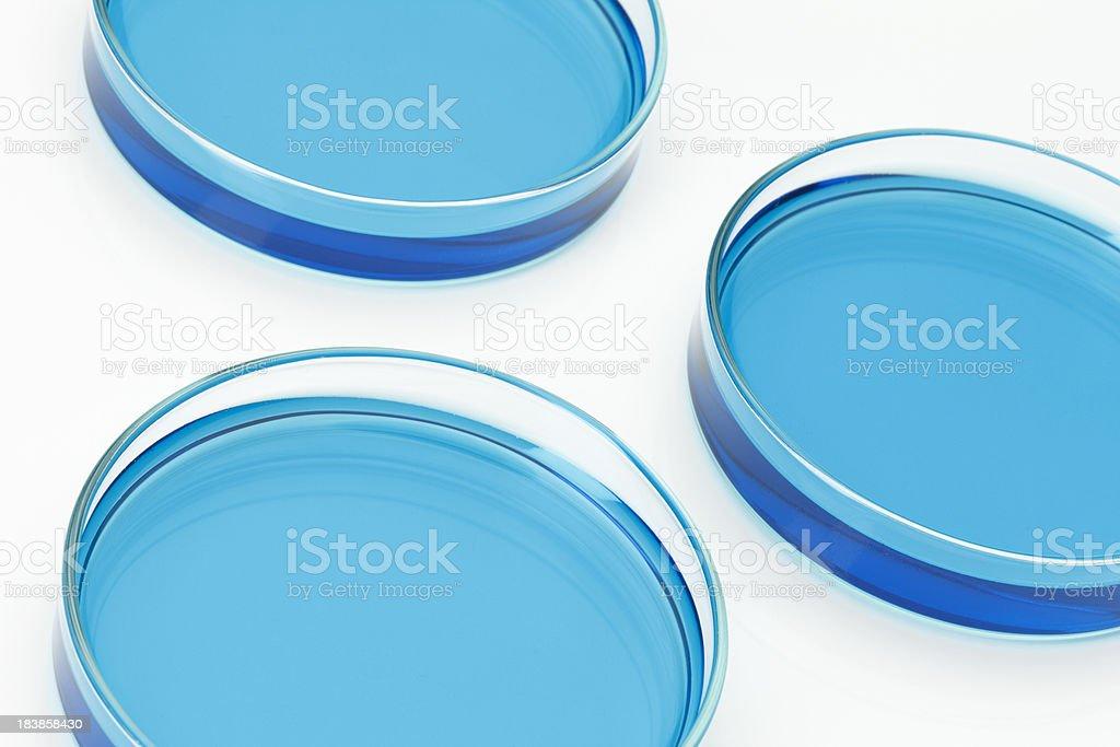 Petri Dishes stock photo