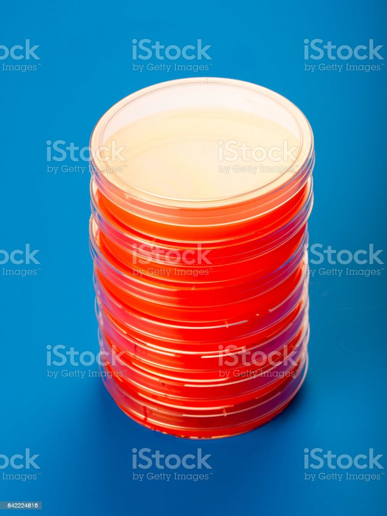 Petri dishes with blood agar stock photo