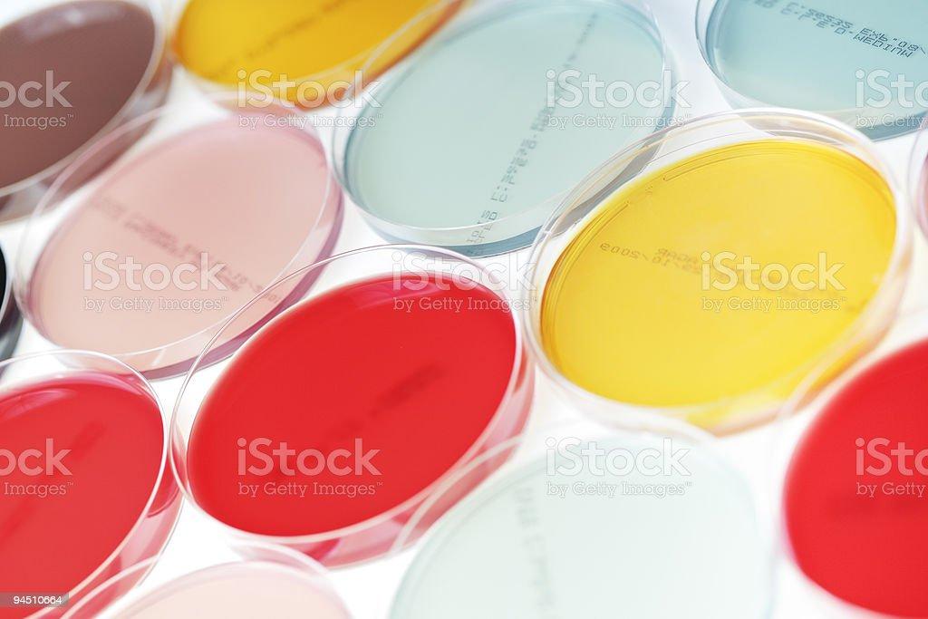 petri plate stock photo