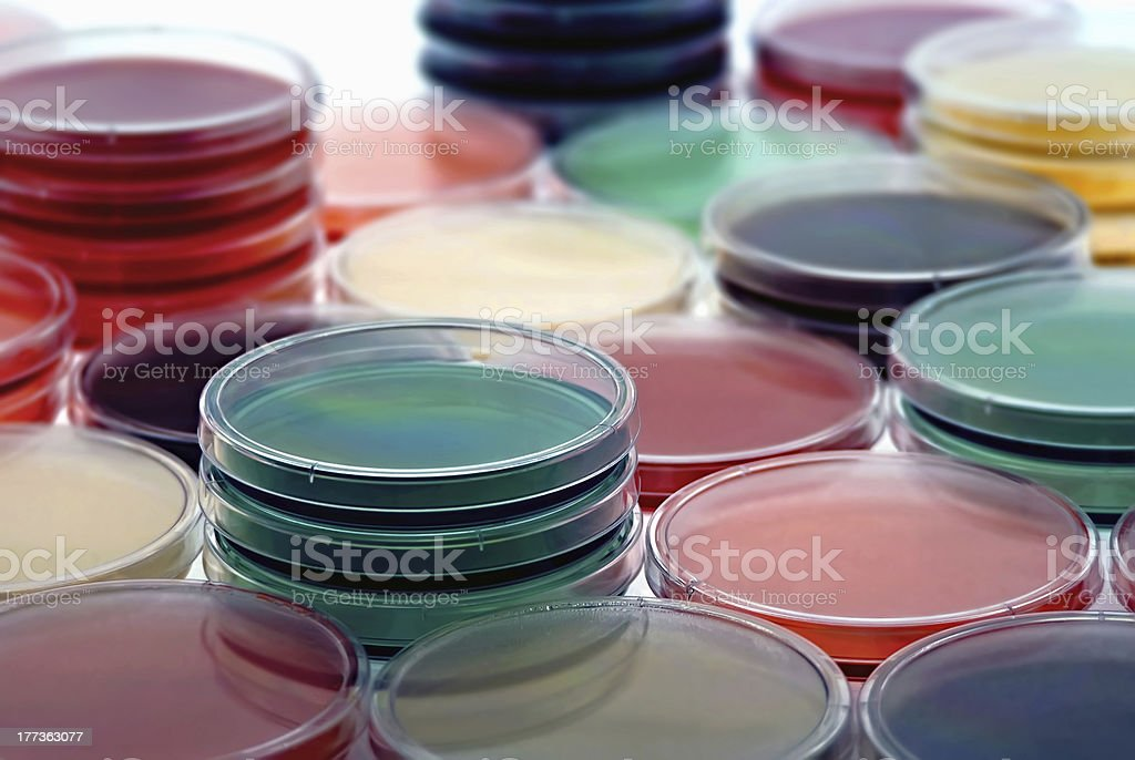 petri plates collection royalty-free stock photo