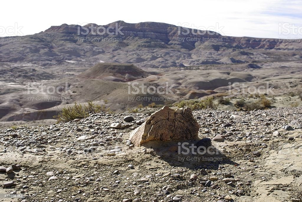 Petrified forest in Patagonia stock photo