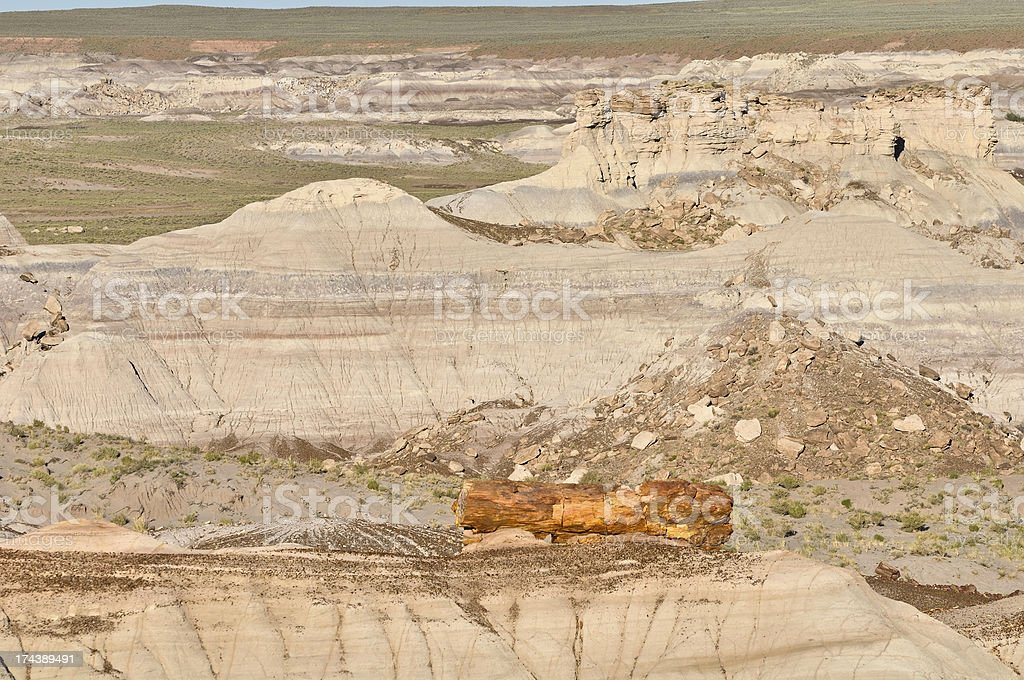 Petrified Forest National Park royalty-free stock photo
