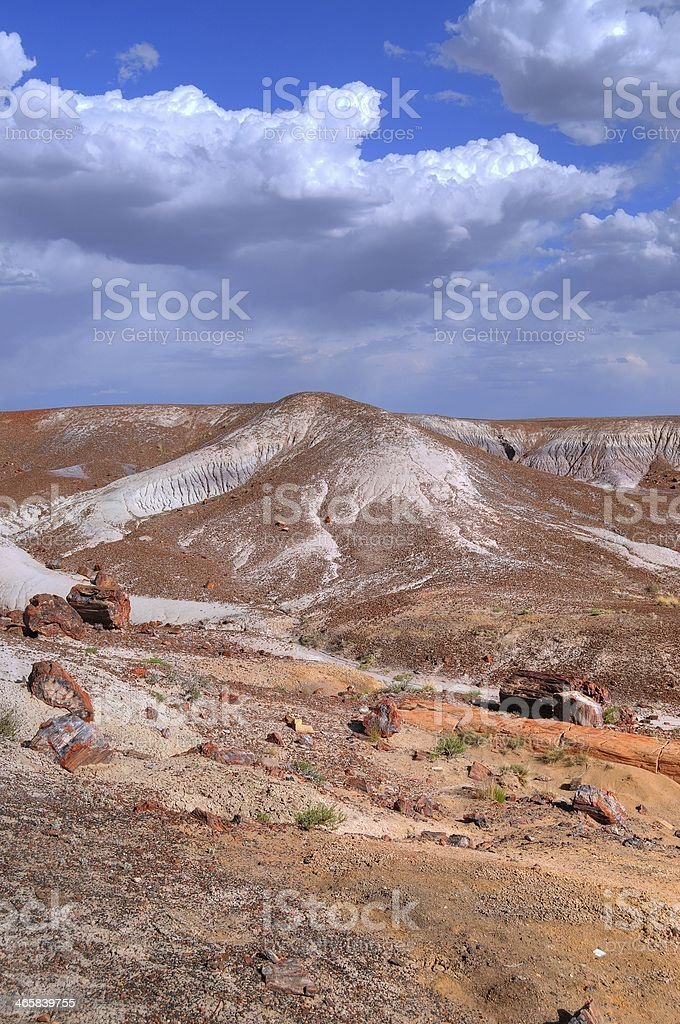 Petrified Forest royalty-free stock photo