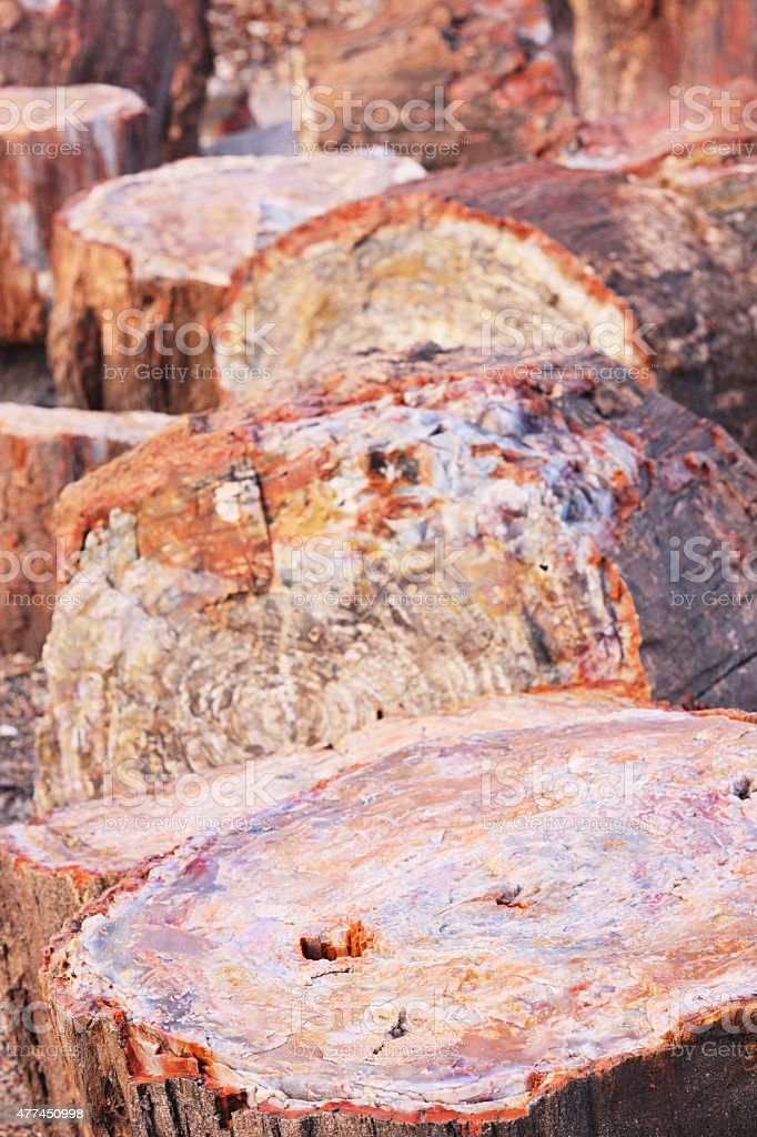 Petrified Forest Wood Triassic Fossils stock photo
