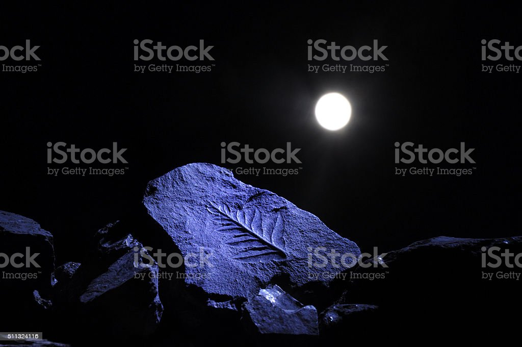 Petrified leaf in the moonlight stock photo